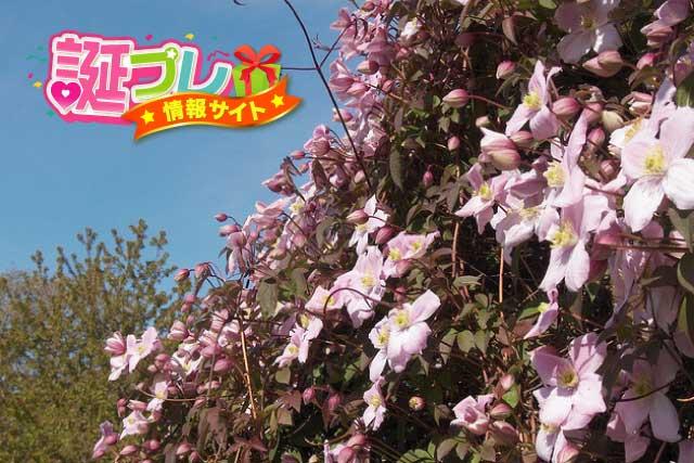 クレマチスの花の画像