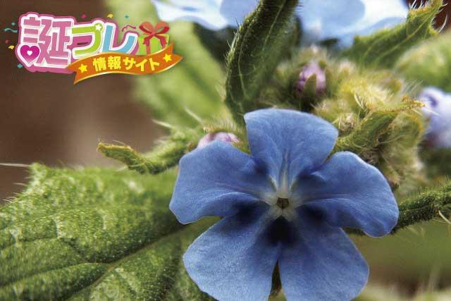 ウシノシタクサの花の画像