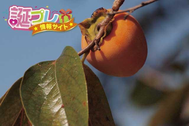 渋柿の画像