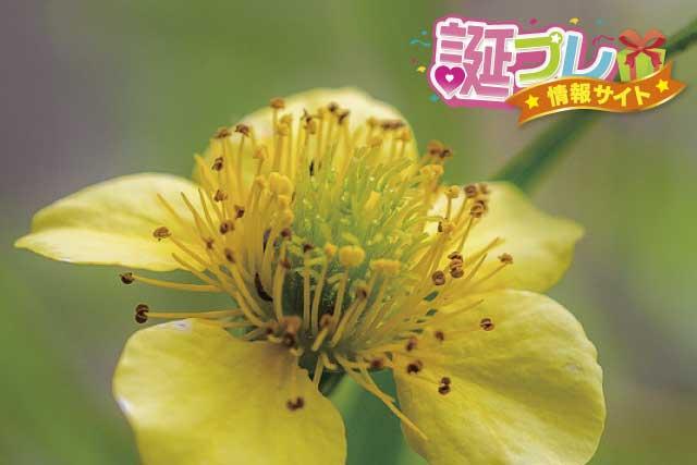 ダイコンソウの花の画像