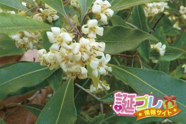 ベルガモットの花の画像