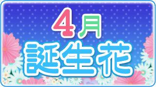 【誕生日が4月の人必見】代表的な4月の3つの誕生花