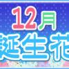 【誕生日が12月の人必見】代表的な12月の2つの誕生花
