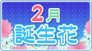 【誕生日が2月の人必見】代表的な2月の3つの誕生花
