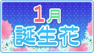 【誕生日が1月の人必見】代表的な1月の3つの誕生花