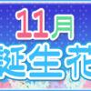 【誕生日が11月の人必見】代表的な11月の2つの誕生花
