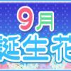 【誕生日が9月の人必見】代表的な9月の3つの誕生花