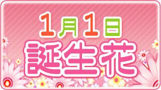 【1/1生まれ必見】1月1日の誕生花は全部で5種類