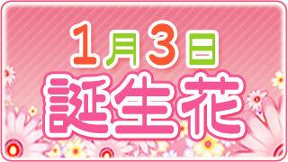 【1/3生まれ必見】1月3日の誕生花は全部で7種類