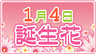 【1/4生まれ必見】1月4日の誕生花は全部で5種類