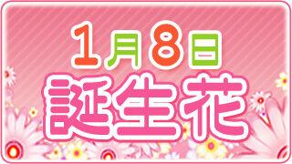 【1/8生まれ必見】1月8日の誕生花は全部で5種類