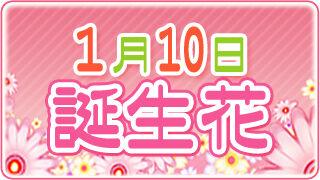 【1/10生まれ必見】1月10日の誕生花は全部で3種類