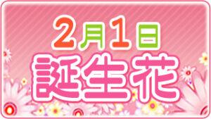 2月1日の誕生花の画像