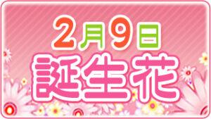 2月9日の誕生花の画像