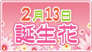 2月13日の誕生花の画像