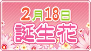 2月18日の誕生花の画像