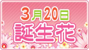 3月20日の誕生花の画像