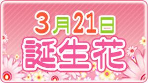 3月21日の誕生花の画像
