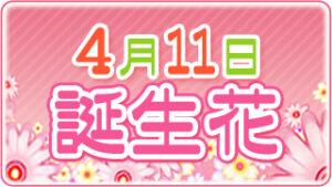 4月11日の誕生花の画像