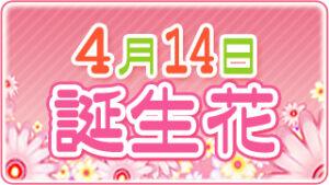 4月14日の誕生花の画像