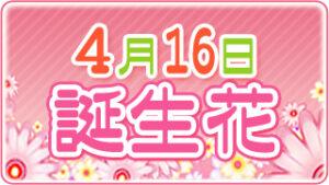 4月16日の誕生花の画像