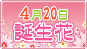 4月20日の誕生花の画像