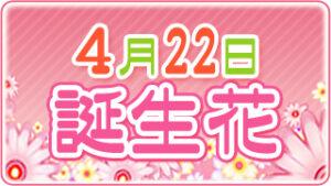 4月22日の誕生花の画像