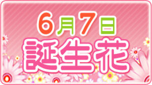 6月7日の誕生花の画像