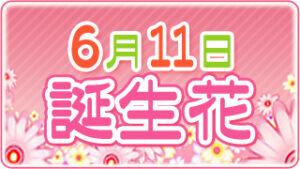 6月11日の誕生花の画像