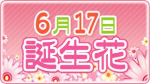 6月17日の誕生花の画像