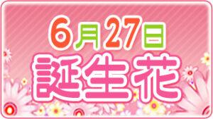 6月27日の誕生花の画像