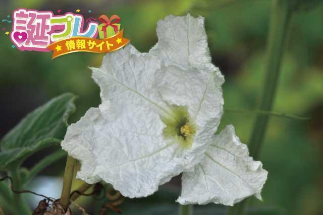 ひょうたんの花の画像