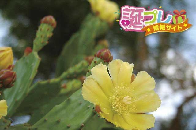 サボテンの花の画像