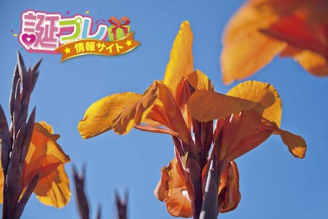 かんなの花の画像
