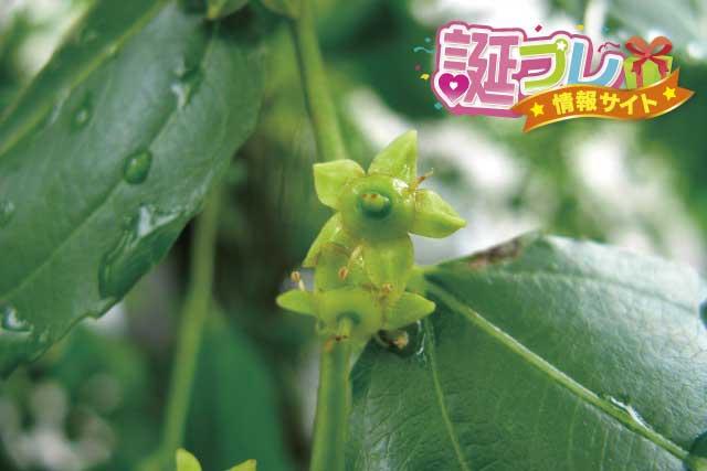 棗の花の画像