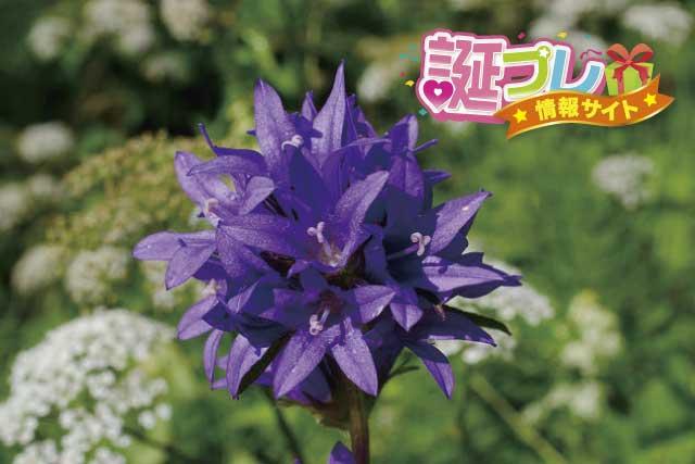 ヤツシロソウの花の画像
