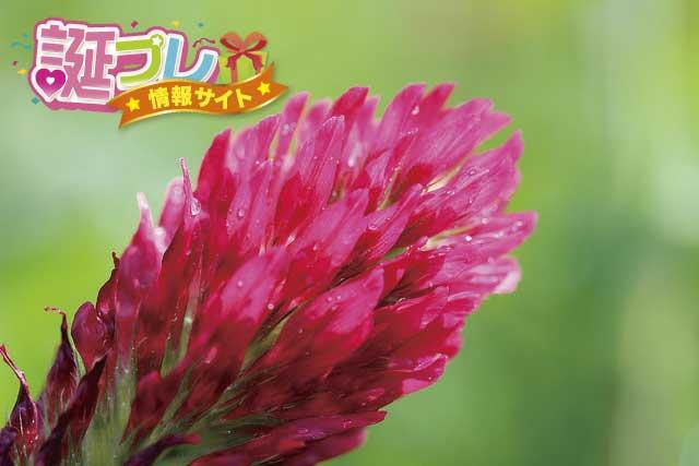 ストロベリーキャンドルの花の画像