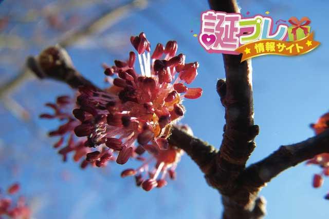 楡の花の画像