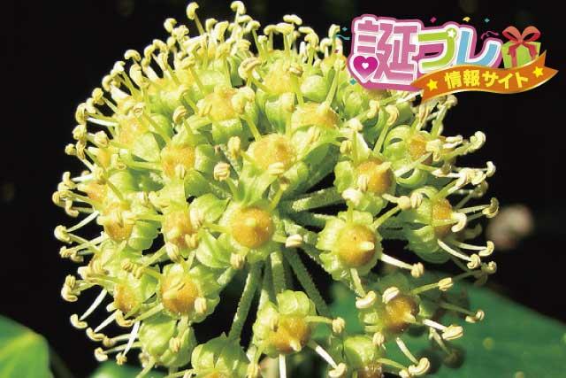 アイビーの花の画像