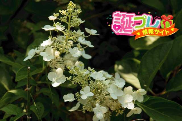 スギナの花の画像