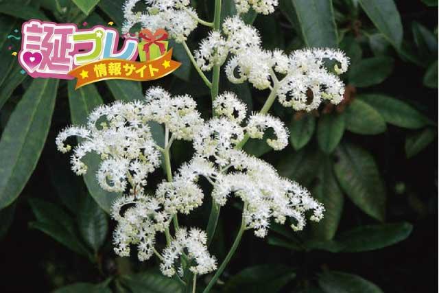 矢車草の花の画像