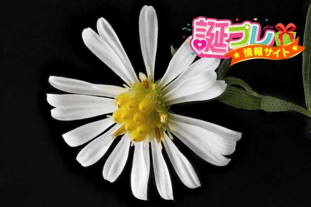 孔雀草の花の画像