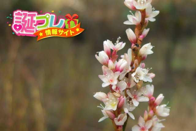 蓼の花の画像