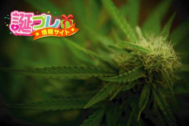 麻の花の画像