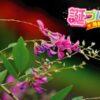 萩(ハギ)の花言葉は、想いを表現したかのような2つの言葉