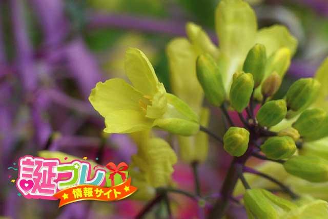 葉牡丹の花の画像