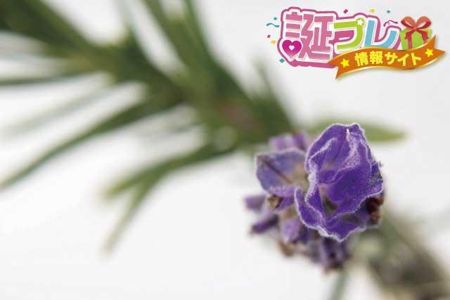 ローズマリーの花の画像