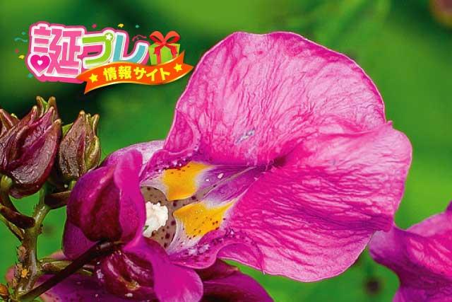 ツリフネソウの花の画像