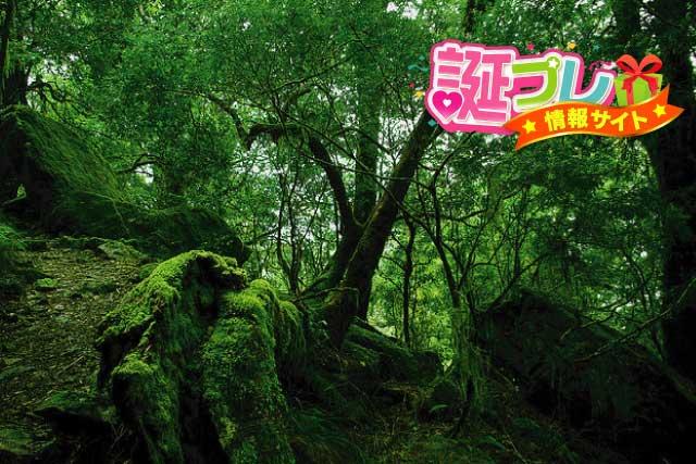 苔の森の画像
