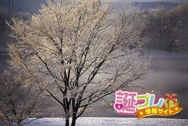 冬桜の画像